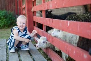 Lapsi ja lampaita aitauksessa
