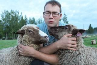Koivusalon mökillä mies lampaiden kanssa