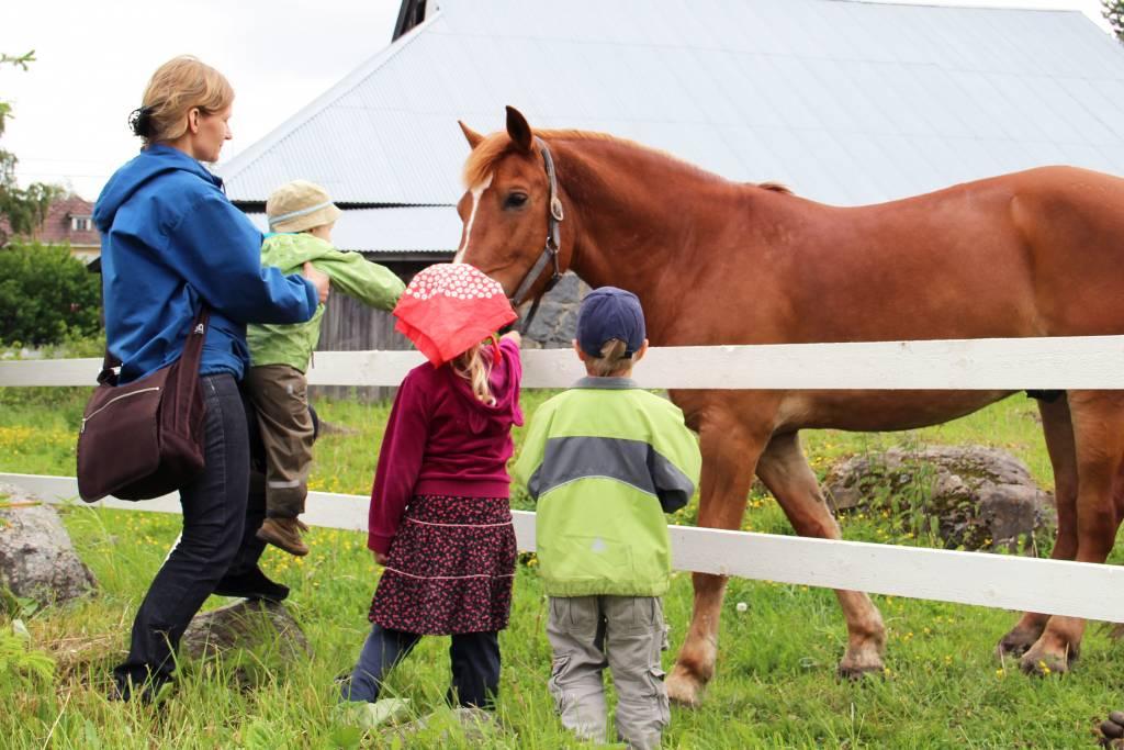 Perhe katsoo hevosta aitauksessa Ilolan Maatilamatkailun kotieläinpihalla