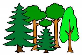 Piirrettyjä puita.