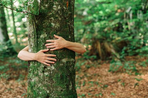 Kädet halaa puuta.