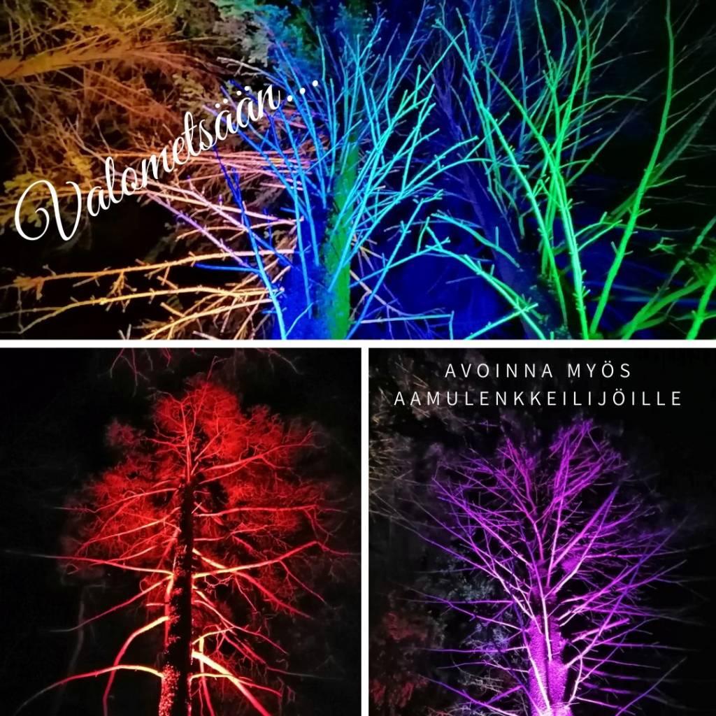 Valometsästä voit nauttia nyt myös aamulenkillä. Värilliset valot valaisevat metsän puita.