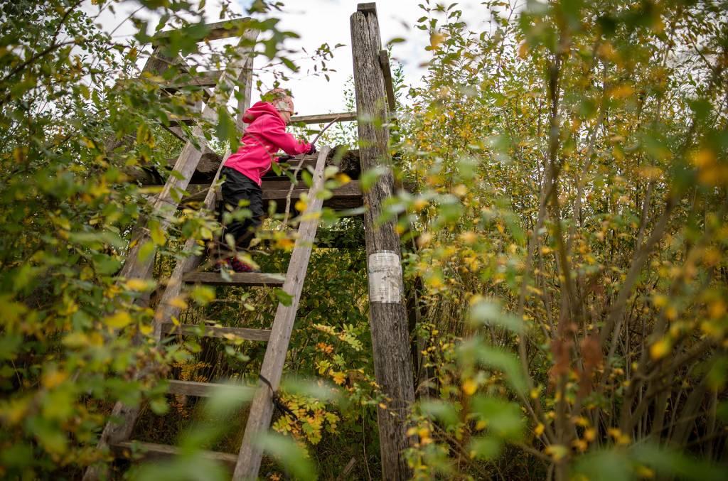 Tyttö kiipeää Vähäjärven lintutorniin.