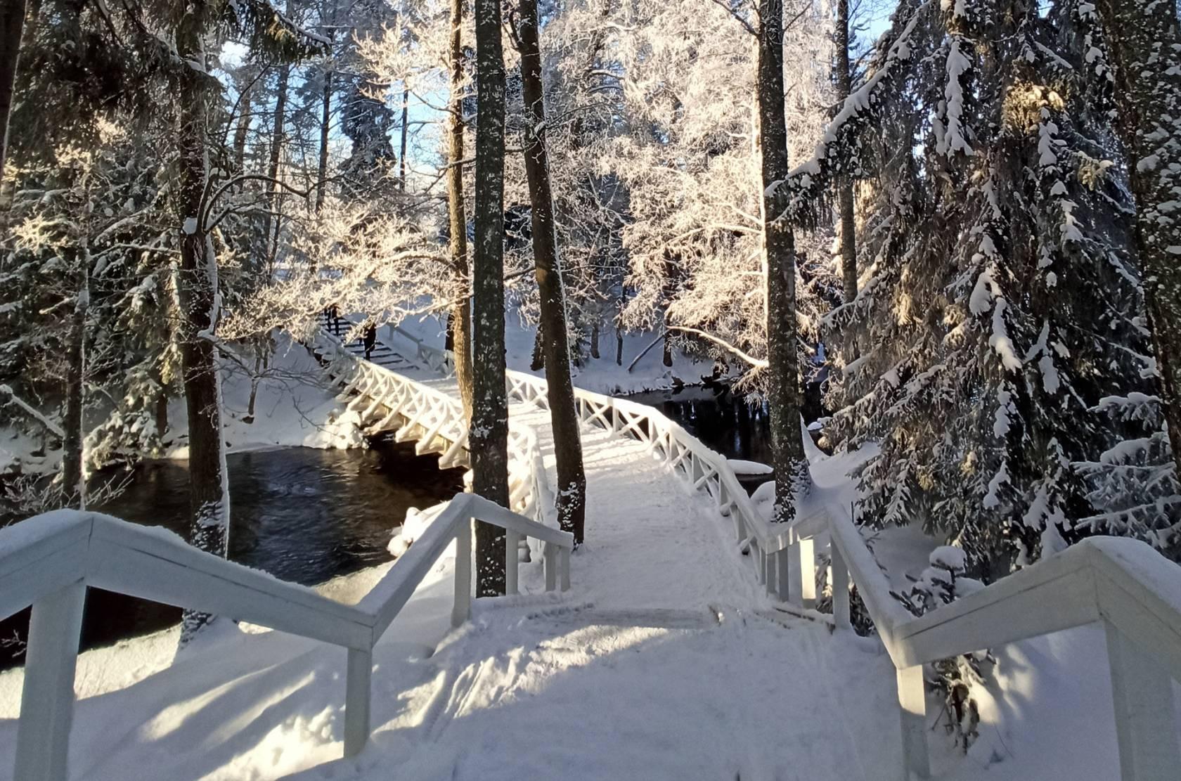 Riippusiltojen lenkin luminen silta puiden ympäröimänä.