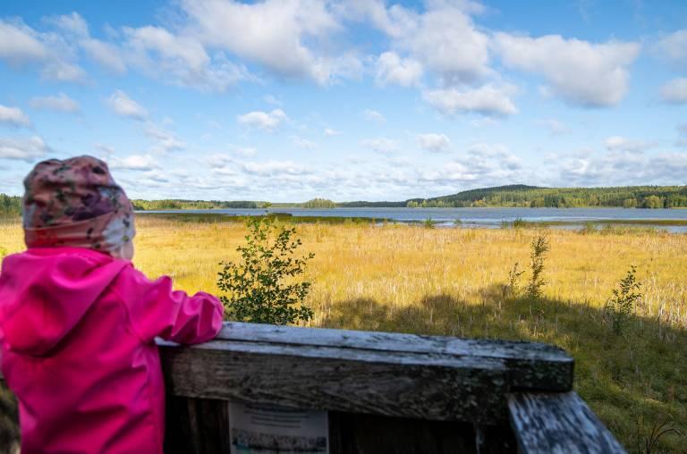 Tyttö katselee maisemaa lintutornilta Tykölänjärvelle.