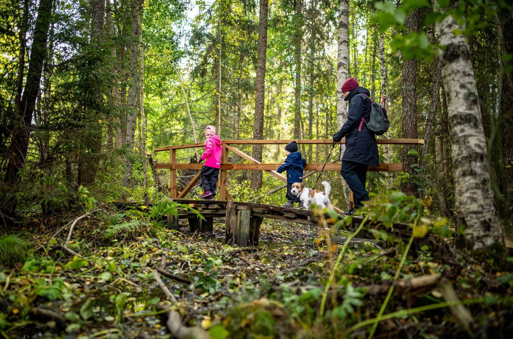 Perhe kävelee koiran kanssa pienellä sillalla vehreässä metsässä.