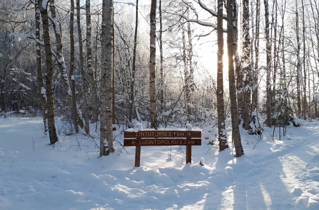 Vallonjärven luontopolun opaste talvisessa maisemassa.