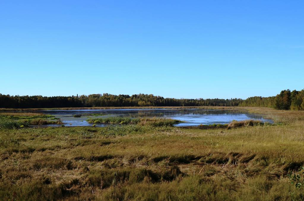 Syksyinen maisema Saarioisjärvelle lintutornista kuvattuna.