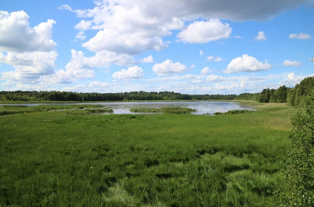 Kesäinen maisema Saarioisjärvelle lintutornista kuvattuna.