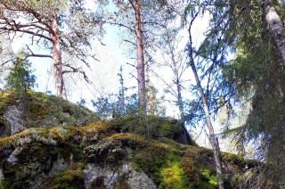 Kallio metsässä.
