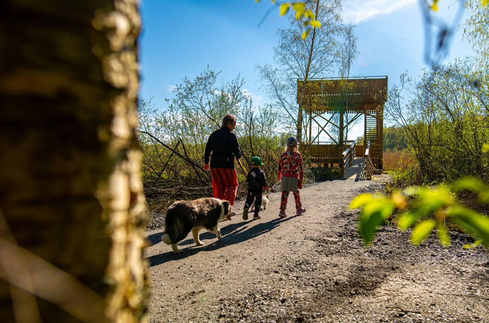 Mies, koira ja kaksi lasta kävelevät kohti Vallonjärven lintutornia.