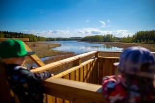Lapset katselevat Vallonjärven lintutornilta järvelle päin.