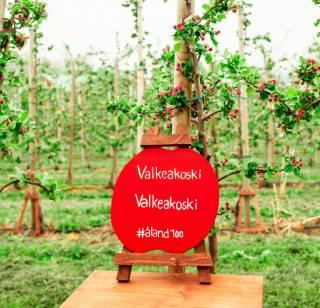 Valkeakosken nimikko-omenapuu Ahvenanmaalla