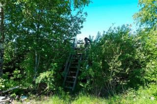 Vähäjärven lintutorni kesäisessä maisemassa.