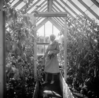 Vanha nainen seisoo kasvihuoneessa.