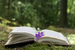 Kirja, minkä sivut auki ja sivujen päällä sininen kukka.