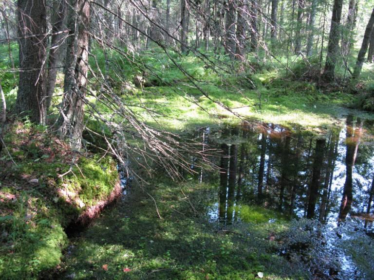 Pohjaveden purkauman muodostama allikkolähde.