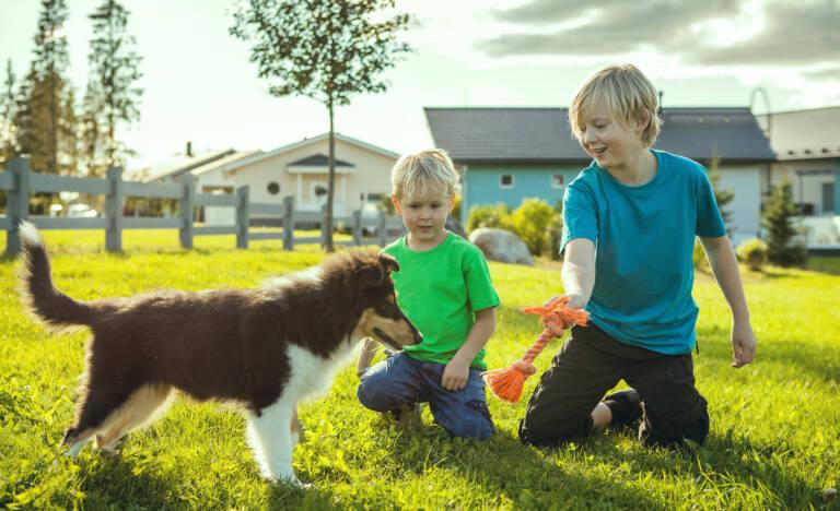 Kaksi poikaa ja koira leikkivät omakotitalon pihalla.